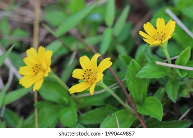 Beautiful yellow flowers with fresh green leaves  - Shutterstock ID 1990449857