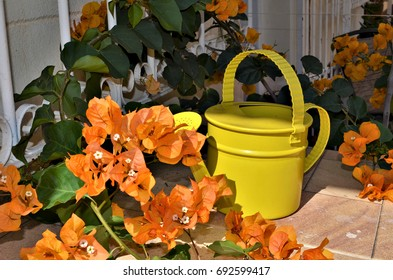 Beautiful yellow flowers and a yellow garden watering can on a sunny day.