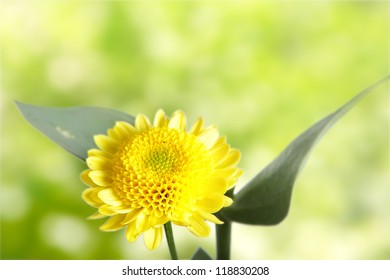 beautiful yellow flowers on natural green background