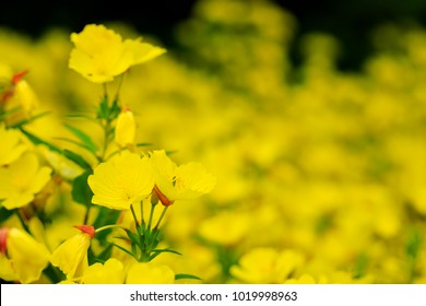 Beautiful yellow flowers picture with selective focus on top of petals. Yellow flowers on the background of the great garden landscape during summer season. Best picture for creative design.
