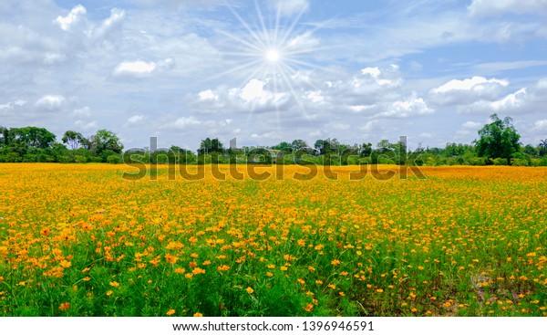 Beautiful Yellow Flowers Sunny Day Wallpaper Stock Photo