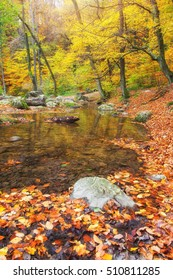 Beautiful yellow forest with small river