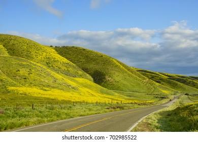 Beautiful yellow goldifelds blossom with a road at Carrizo Plain National Monument, California, U.S.A.