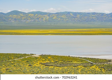 Beautiful yellow goldifelds blossom Beautiful yellow goldifelds blossom with Soda Lake at Carrizo Plain National Monument, California, U.S.A.