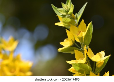 A beautiful yellow and green flowering plant growing to the left with a nice dark bokeh background