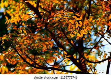 Beautiful yellow leaves of a tree in the autumn season unique photo