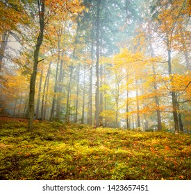 Beautiful yellow orange colored autumn leaves in forest landscape.