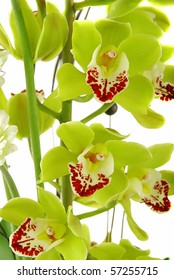 Beautiful yellow orchid (cymbidium) isolated on white background