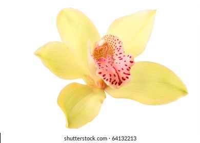 beautiful yellow orchid isolated on white