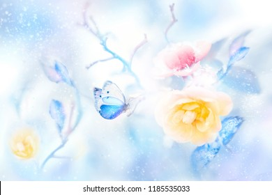 Beautiful yellow and pink roses and blue butterfly in the snow and frost. Artistic colorful winter natural image. Christmas.