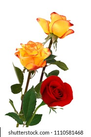 Beautiful yellow and red rose floers isolated on white background