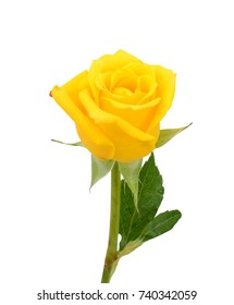 beautiful yellow rose flower isolated on white background