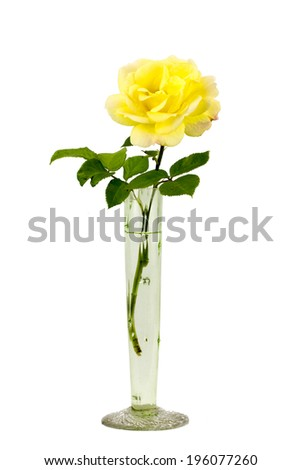Beautiful Yellow Rose Glass Rose Vase Stock Photo Edit Now
