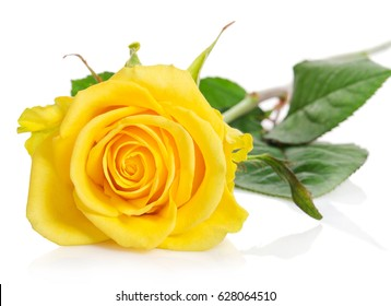 yellow roses images stock photos vectors shutterstock
