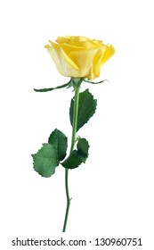 Beautiful yellow rose with long stem isolated on white background. Clipping path is included