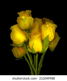 Beautiful yellow roses with a black background