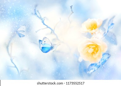Beautiful yellow roses and blue butterfly in the snow and frost. Artistic winter natural image.