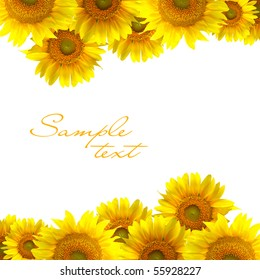 Beautiful yellow Sunflower on the white background