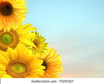 Beautiful yellow sunflower petals close up