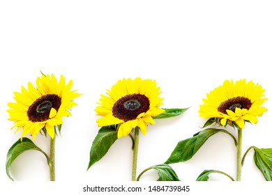 Beautiful yellow sunflowers on white background top view mock up