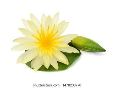 beautiful yellow Water lily flower isolated on white background