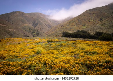 Beautiful yellow wildflowers at Garrapata State Park in Monterey, California near Big Sur.