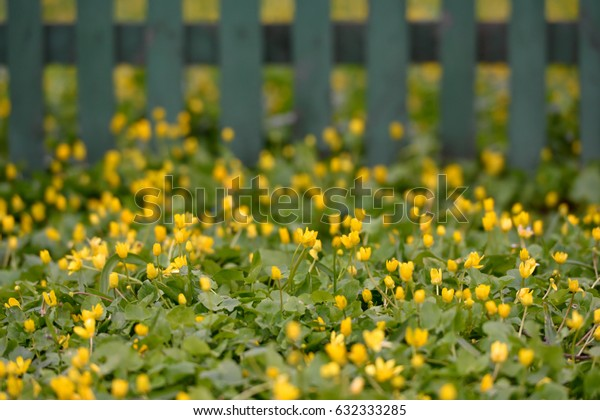 Beautiful yellow wildflowers in the park