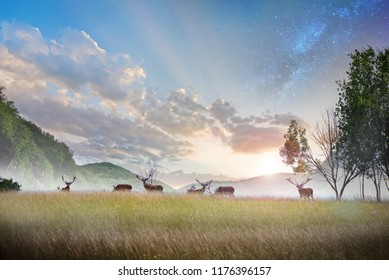 Beautiful young and adult mule red deer bucks (cervus elaphus) herd with growing antlers in the meadow on dramatic sunset or sunrise background with mountains. Majestic animals in natural park.