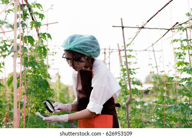 Beautiful young biotechnology woman engineer plant disease researcher in vegetable crops