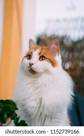 Beautiful young cat