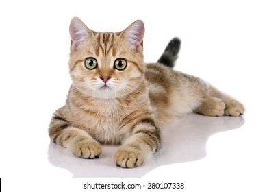 Beautiful young cat lying on a white background