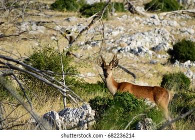 Beautiful young deer posing.