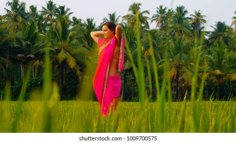 Beautiful and young female in traditional indian clothes (sari, saree) on the green rice field. Traditional indian job - collect rice. Indian woman on the rice paddy. Rice field on the sunset.