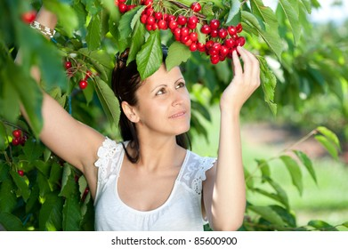 Beautiful young girl picking cherries - cherry fruit harvest in spring in cherrie plantation