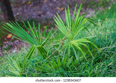 beautiful young palm trees