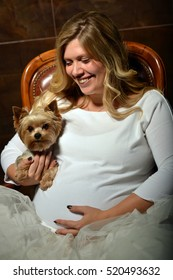 Beautiful young pregnant woman sitting in a brown leather chair. In her hands she holds a dog Yorkshire terrier.