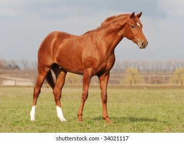 beautiful young warm blood stallion in the spring sunlight