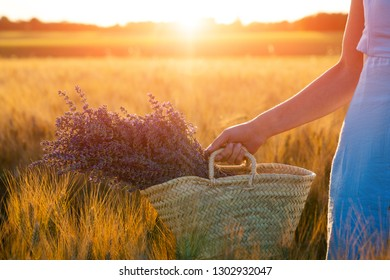 Beautiful young woman in blue dress holds bouquet of flowers lavender in basket while walking outdoor through wheat field at sunset in summer. Provence, France. Toned image with copy space.