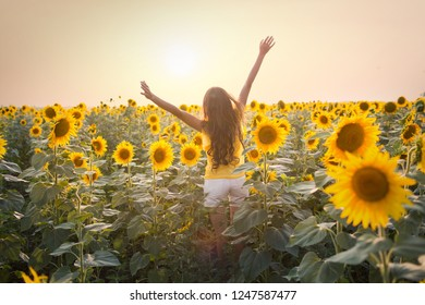 Beautiful young woman in a field of sunflowers in a white dress