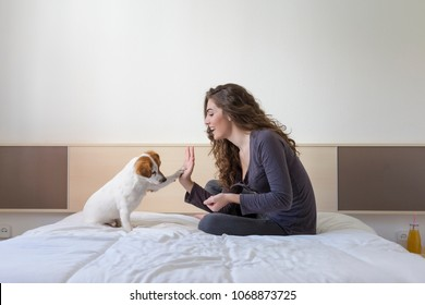 beautiful young woman hand high five with cute small dog over white background. Dog is sitting on bed. Daytime, pets indoors, lifestyle