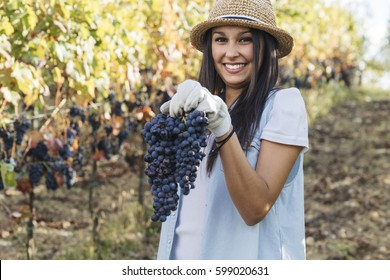 beautiful young woman holding a large grape while harvesting