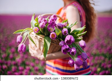 Beautiful young woman with long red hair wearing a striped dress holding a basket with bouquet of purple tulips flowers on background on purple tulip fields. Sping concept