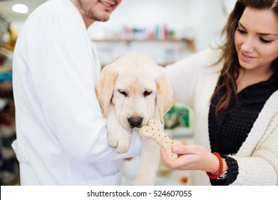 Beautiful young woman owner cuddling her gorgeous Labrador retriever puppy on veterinary checking or examination.