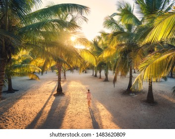 Beautiful young woman is walking in palm alley at sunset. Summer travel. Tropical landscape with slim girl in white lace dress on the sandy beach, green palm trees, orange sunlight. Vacation in Africa