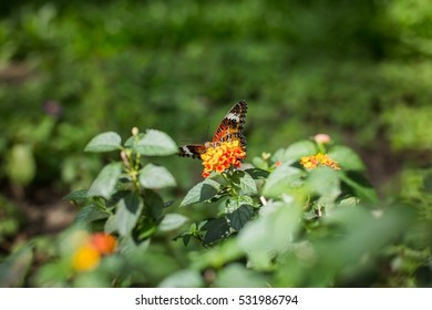 beautiful.Butterfly.Flower