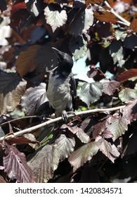 beautifull baby raven closeup photo