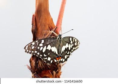a beautifull batterfly