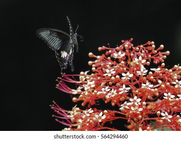 beautifull butterfly on a black background