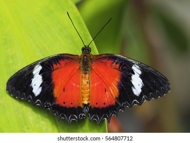 beautifull butterfly on a green leaf
