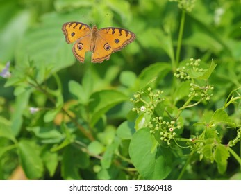 Beautifull Butterfly on a natural background